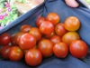 Grow_tomatoes_2